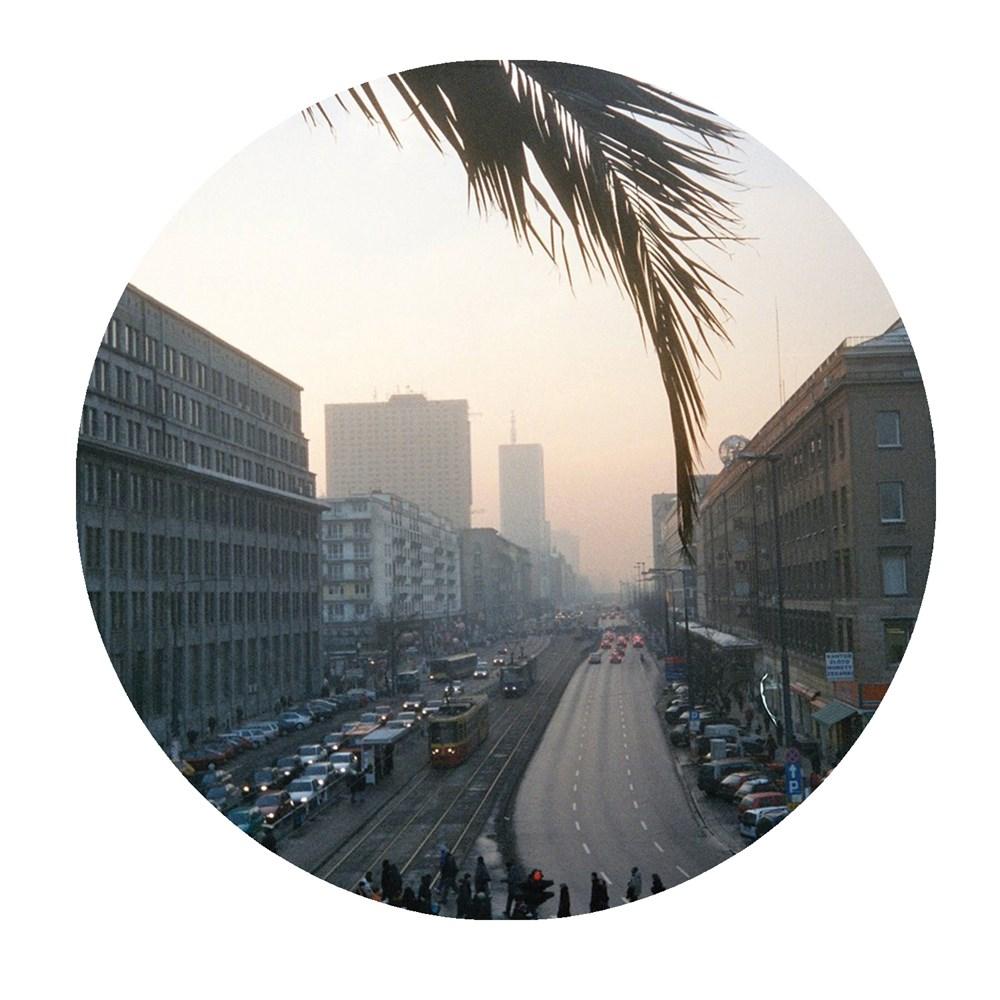 palms007