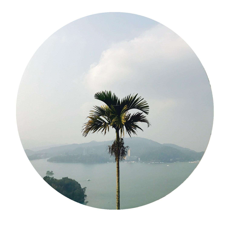 palms011