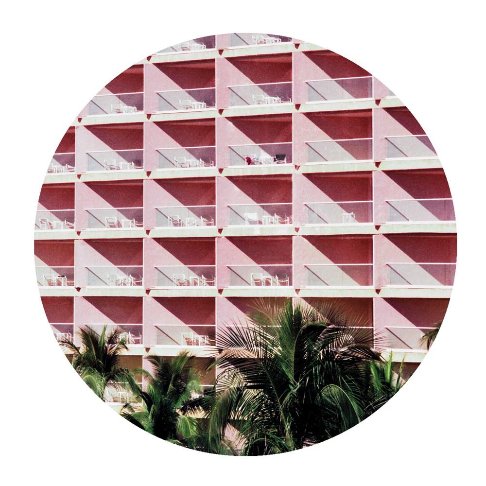 palms014