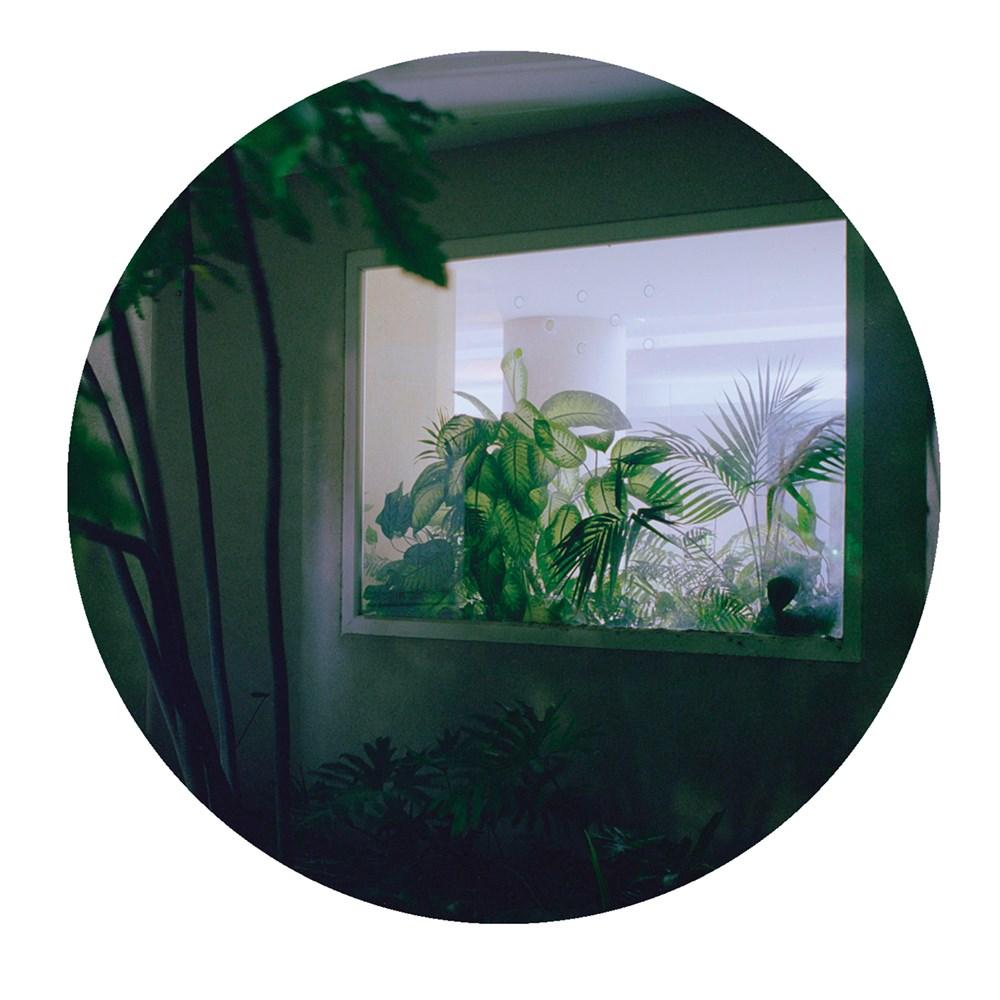 palms015