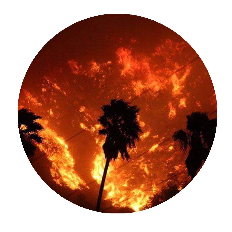 palms019
