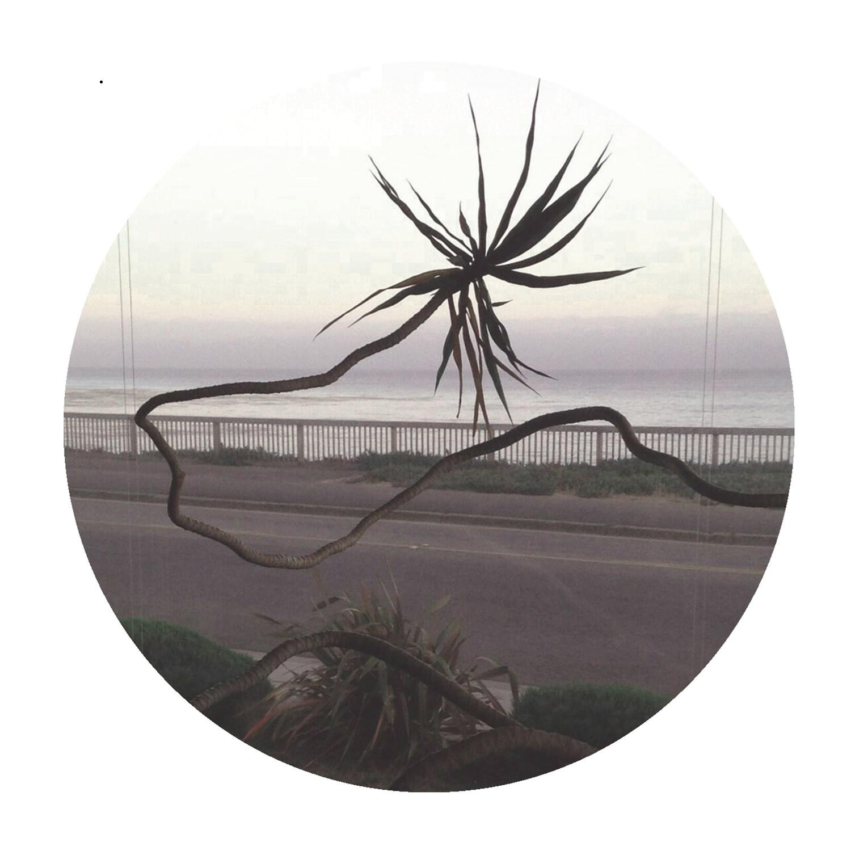 palms020