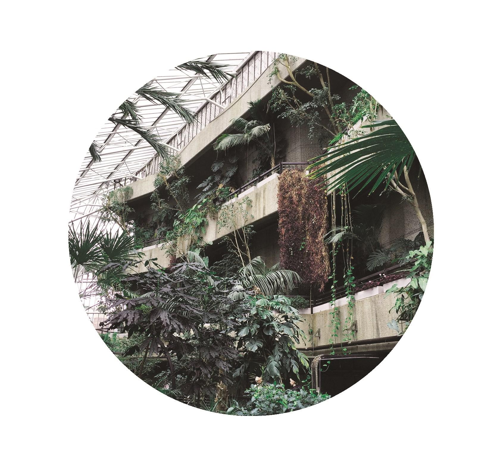 palms021