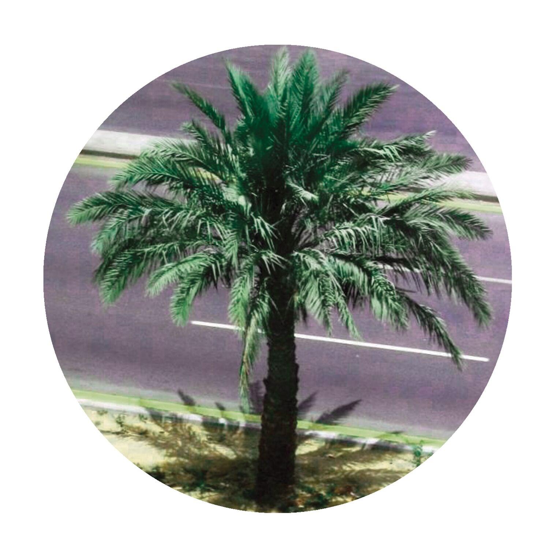palms022
